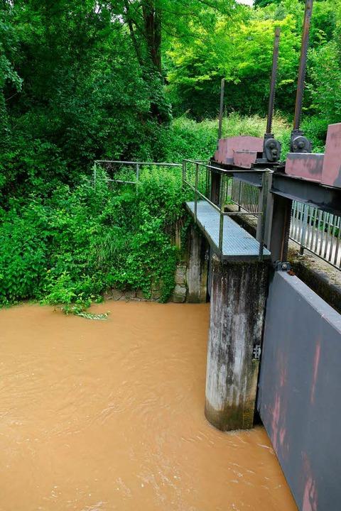 Trübe Brühe im Mühlbach bei Gottenheim...ie Ufer treten bestand indessen nicht.  | Foto: Manfred Frietsch