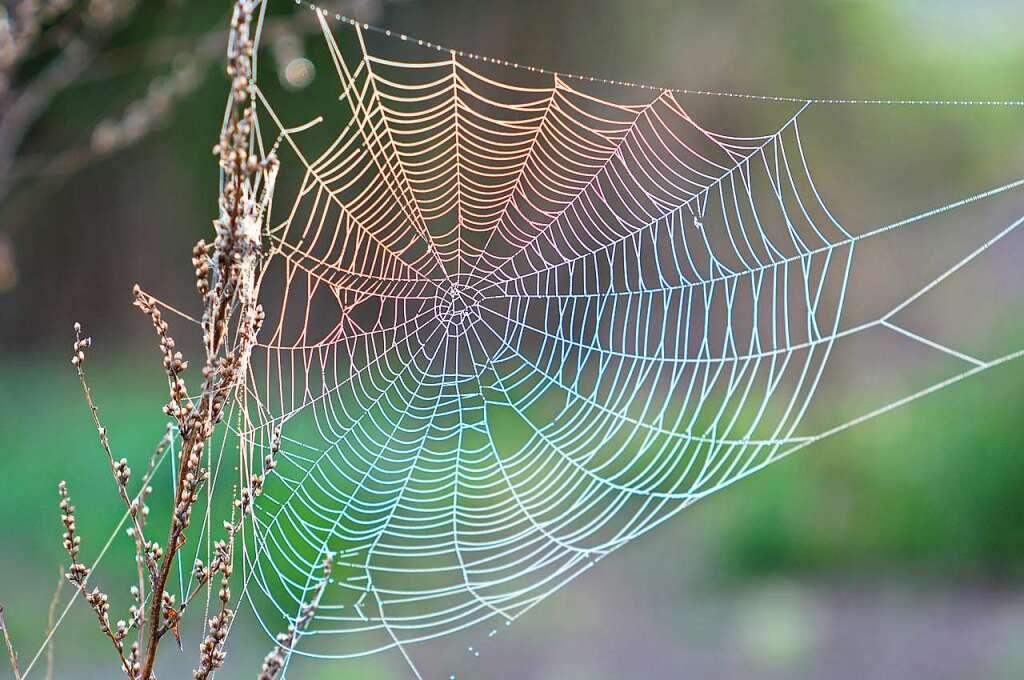 warum viele sich vor spinnen ekeln und was man dagegen tun kann panorama badische zeitung