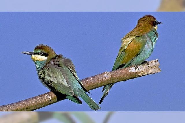 Junge Vögel sind nicht hilflos