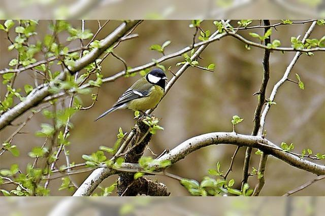 Exkursionen zum Tag der Artenvielfalt