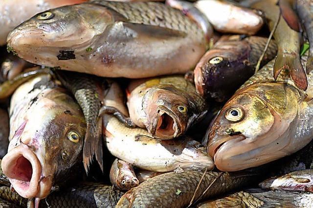 Frühlingshitze macht Fischen zu schaffen
