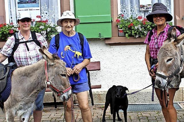 Mit Eseln auf genussvoller Wandertour