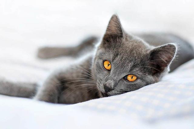 Katzenpension in Müllheim: Wenn auch die eigene Katze in den Wellnessurlaub geht