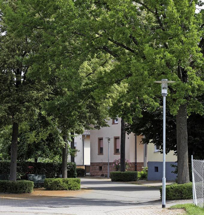 Die Bäume in der Blumenstraße in Kippe...  gefällt und  ersetzt werden sollen.     Foto: Christoph Breithaupt