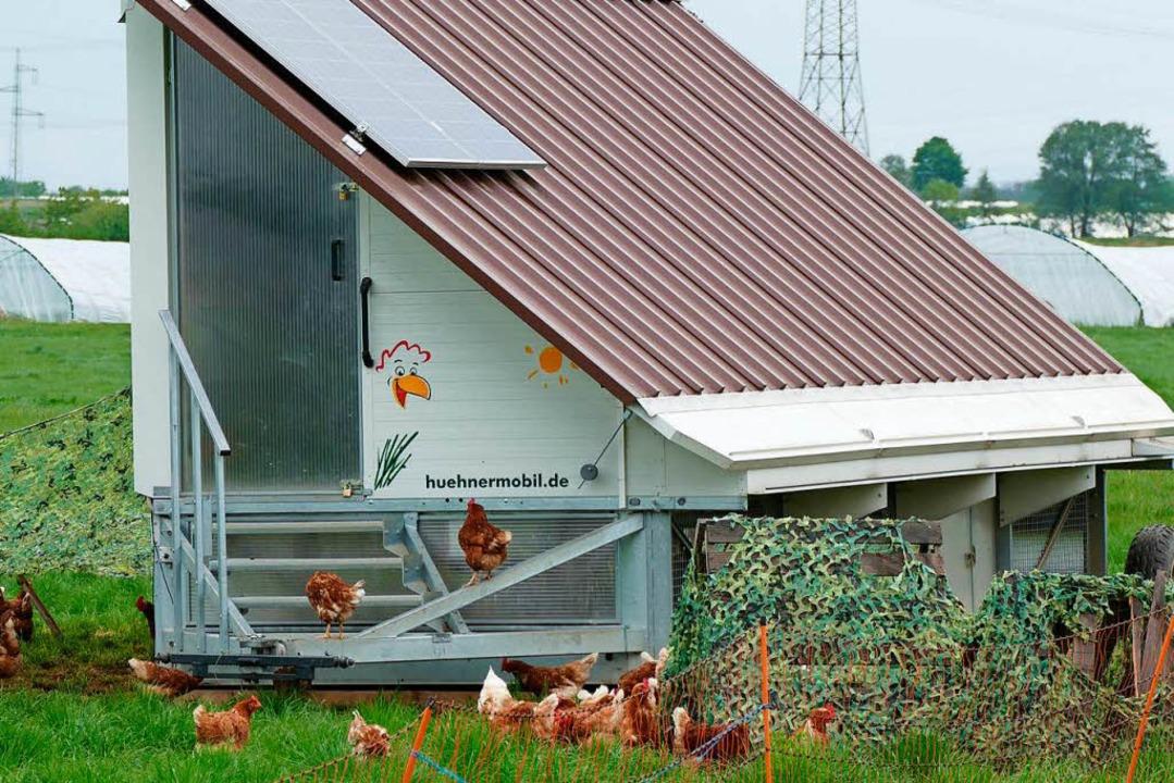 Ein zweites solches Hühnermobil möchte Joel Siegel anschaffen.  | Foto: Nikola Vogt