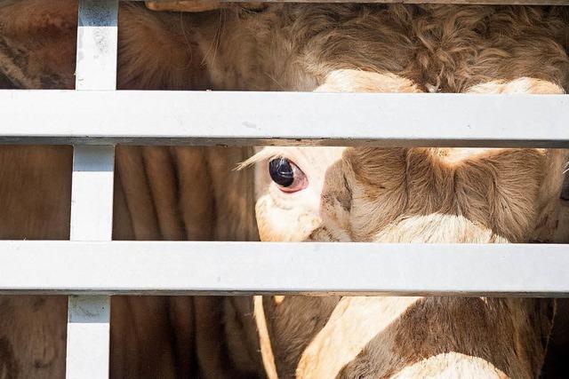 """Die Aktion """"Vigil"""" am Freiburger Schlachthof will die Fleischindustrie anprangern"""