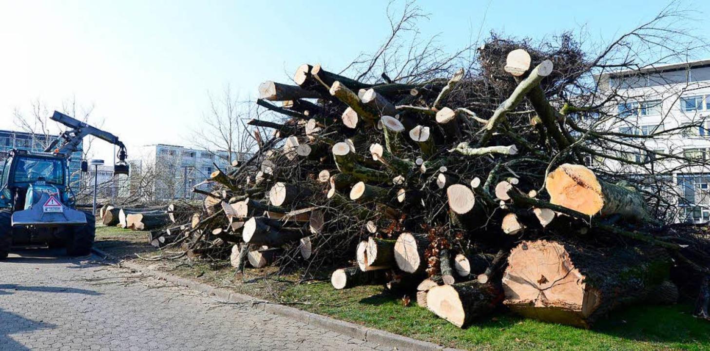 Damit die neue Kinderklinik an der Bre...en 89 Bäume im Februar gefällt werden.  | Foto: Ingo Schneider