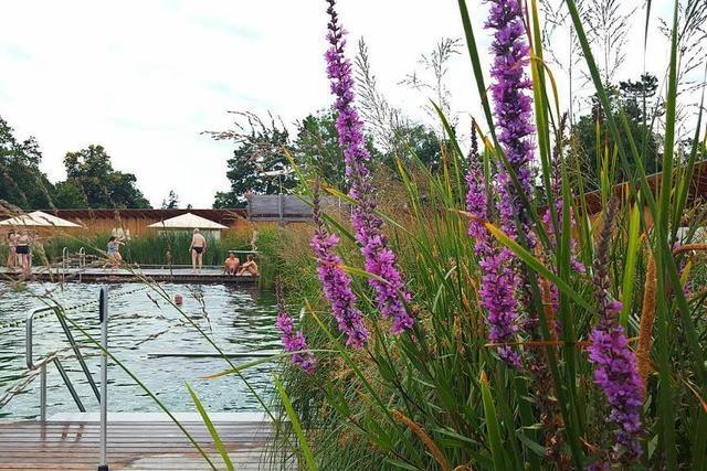 Das Naturbad in Riehen knackt die 250.000-Besucher-Marke