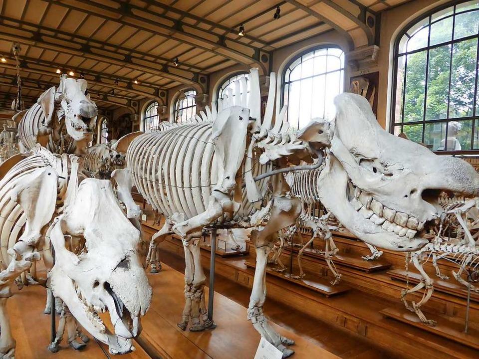 Knochengucken im Museum: Eine gute Beschäftigung an Regentagen.  | Foto: Michael Neubauer