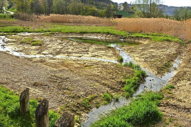 Rückhaltebecken helfen beim Pestizidabbau