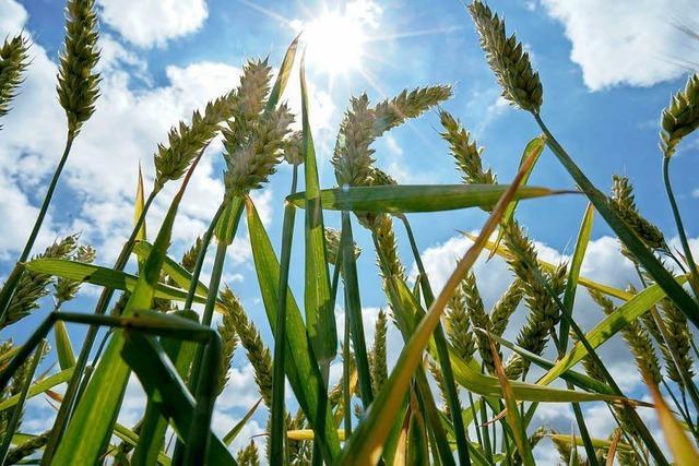 Dürre hat Südbaden bislang verschont