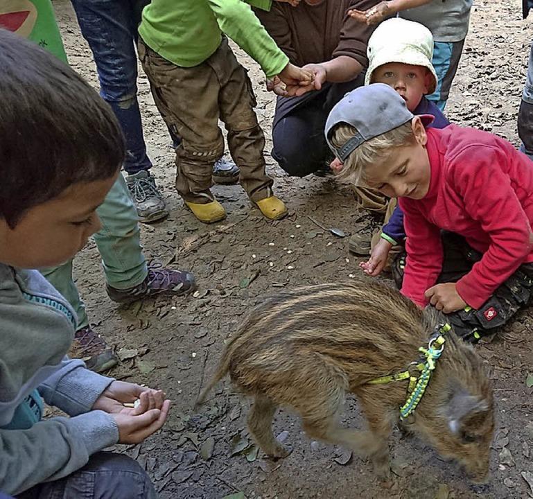 <BZ-FotoAnlauf>Waldkindergarten:</BZ-FotoAnlauf> Streicheleinheit für  Fidel.   | Foto: privat