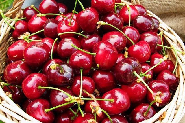 Supermärkte bieten kaum heimische Kirschen – Obstbauern beschweren sich