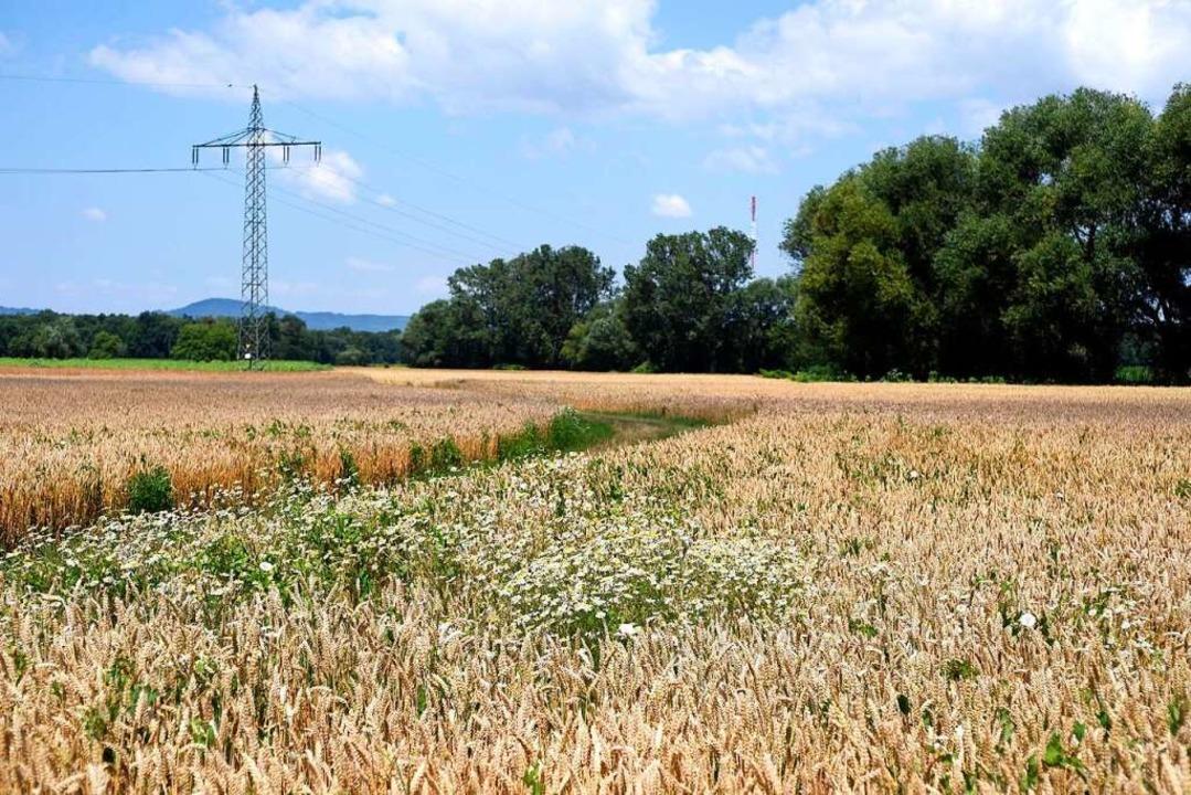 Ackerfläche auf dem geplanten Stadtviertel Dietenbach.  | Foto: Thomas Kunz