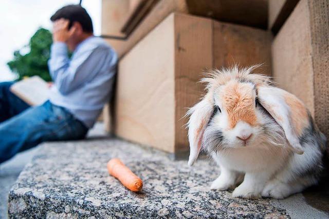 Besitzer macht mit Kaninchen regelmäßig Ausflug vor die Oper