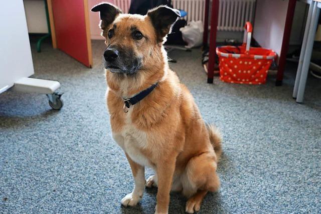 Wie Schulhund Samba eine Sonderpädagogin in Bonndorf unterstützt