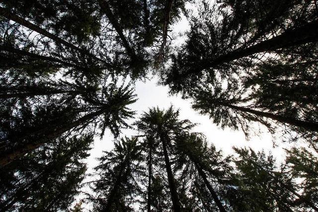 52 kleine und große Eskapaden im Schwarzwald