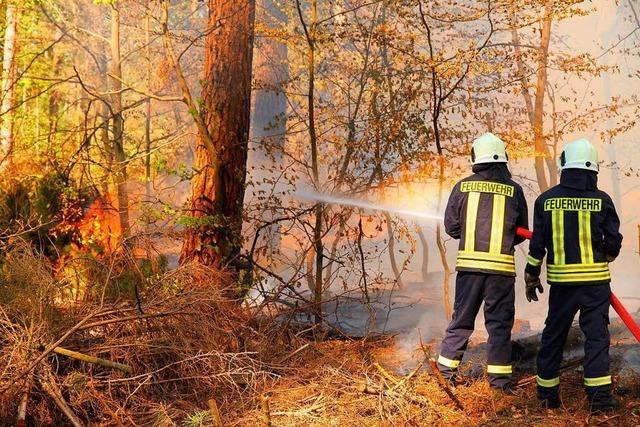 Die Waldbrandgefahr in der Rheinebene ist hoch, warnt das Landratsamt