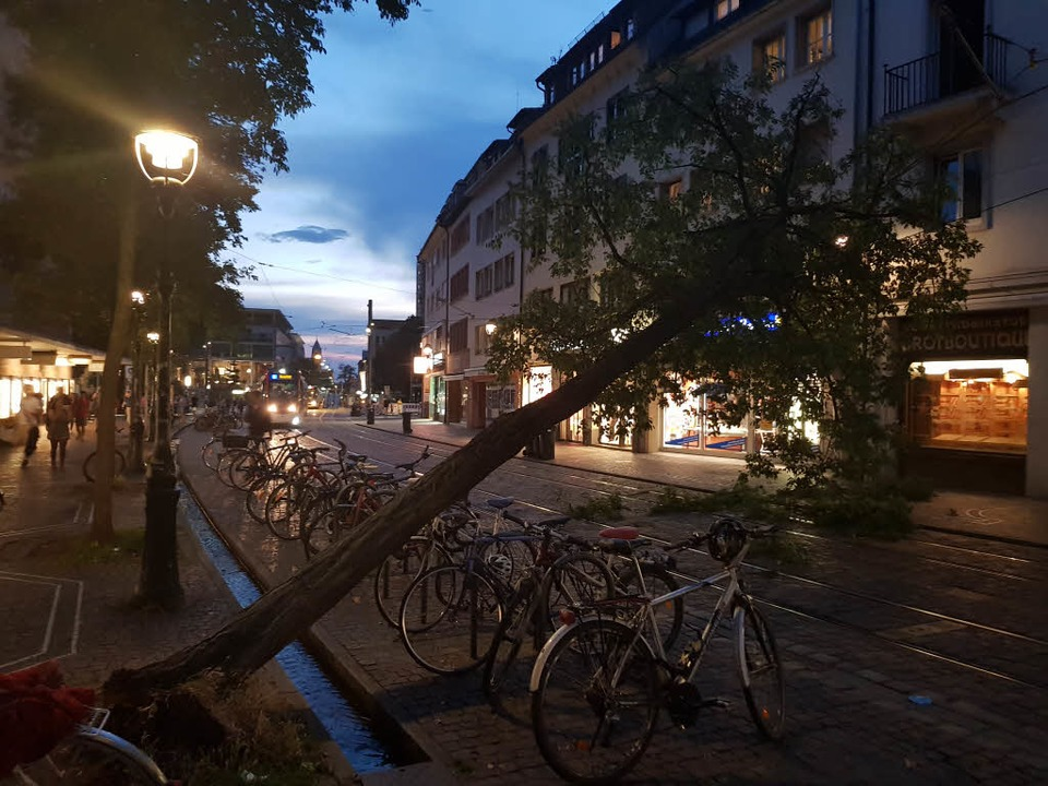 Der Baum stürzte in der Bertoldstraße in die Oberleitung.    Foto: Sebastian Wolfrum