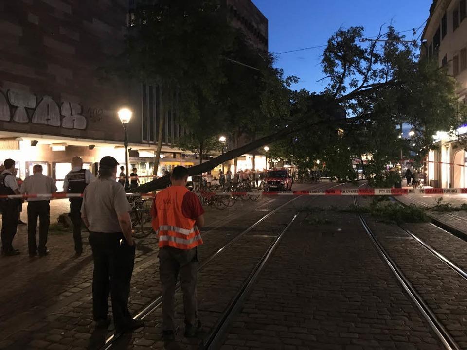 Der Baum stürzte in der Bertoldstraße in die Oberleitung.    Foto: Michael Saurer
