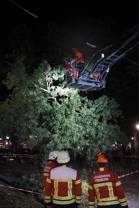 Der Baum stürzte in der Bertoldstraße in die Oberleitung.    Foto: Thomas Kunz