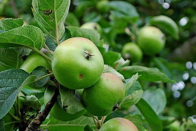 Das Lörracher Umweltzentrum Truz sucht Baumpaten