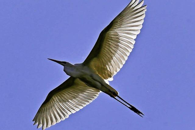 Was uns die Ringe der Vögel sagen