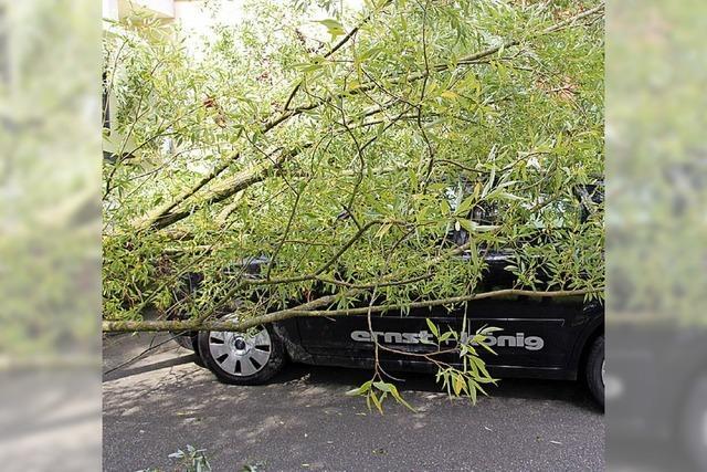 Weide stürzt auf Auto und Straße