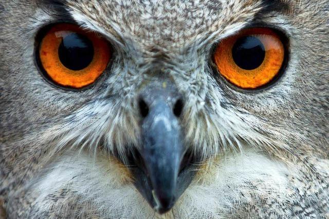 Vogelexperte: