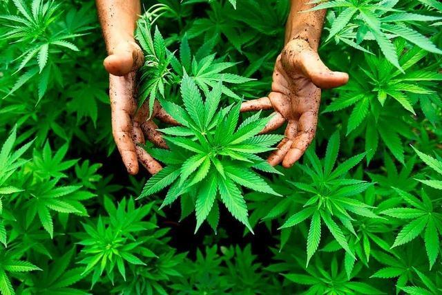 Polizisten finden bei Kontrolle in Lörrach 80 Gramm Marihuana