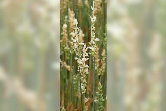 Hagel vernichtet Großteil der Ernte