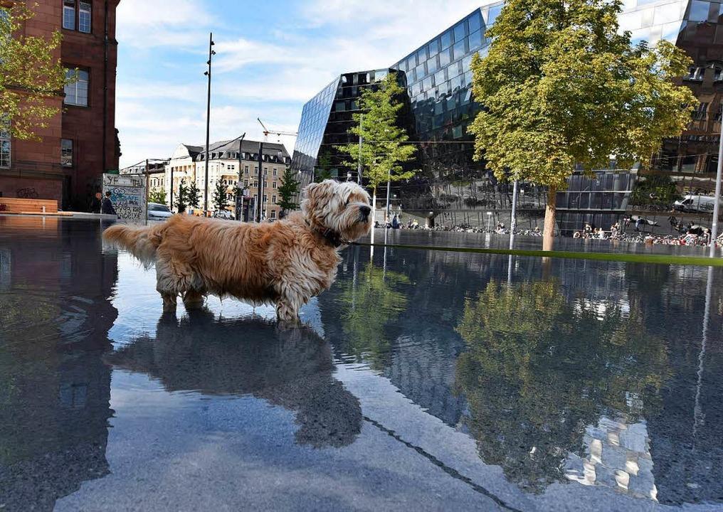 Ab und zu watet auch ein Hund durch den Gedenkbrunnen.    Foto: Rita Eggstein