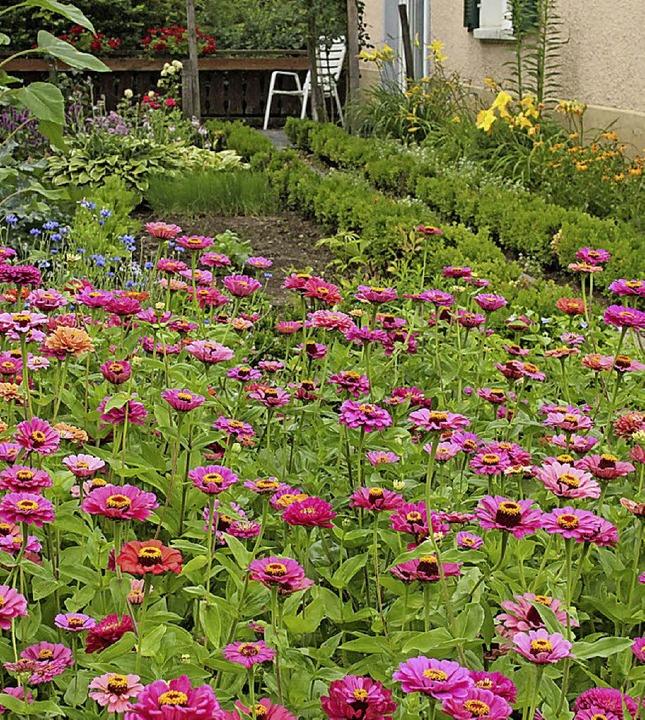 Der Gartentipp aus Egringen: Eine  so ... aus den Samen des Vorjahrs gewinnen.   | Foto: Langelott