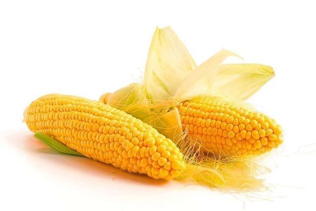 Körner für die Augen: der Mais