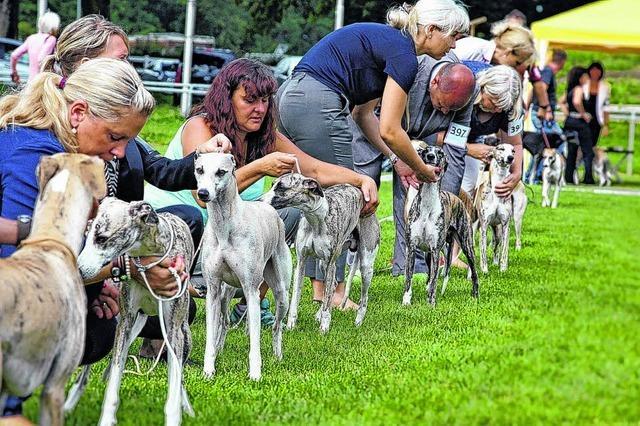 Windhundtage mit Rekord