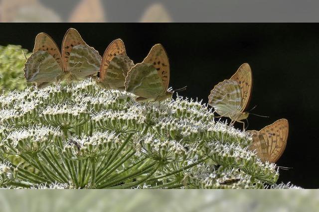 Ein Festmahl für Schmetterlinge