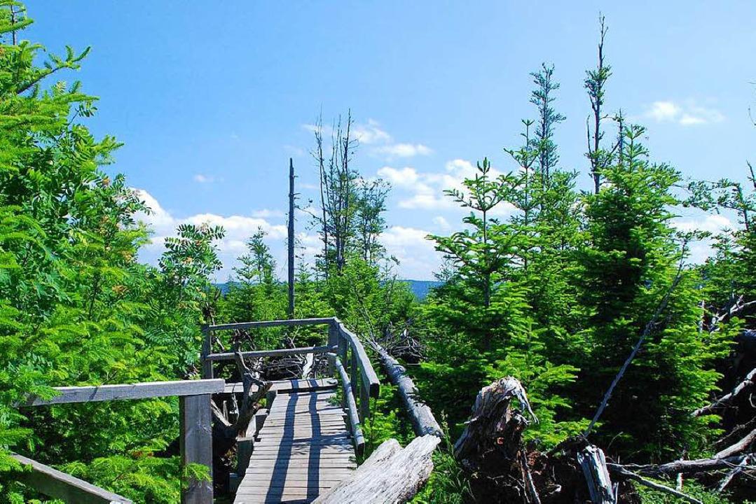 im Nationalpark Schwarzwald kann man Ruhe und Natur genießen.    Foto: Nationalpark