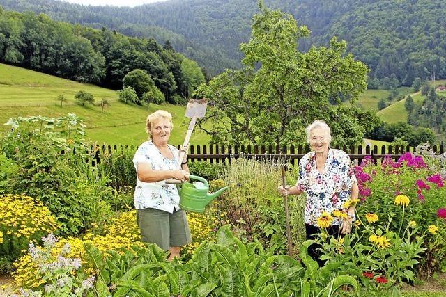 Blumen, Sträucher und Salate