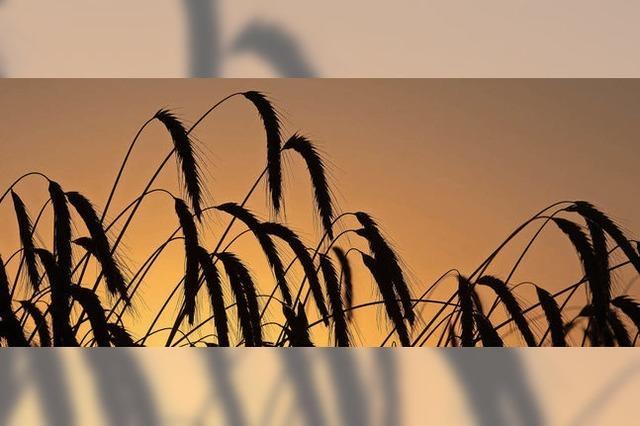 Kaum Tropfen auf die heißen Felder