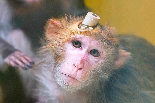 Tierversuche: Notwendiges Übel oder unnötige Quälerei?