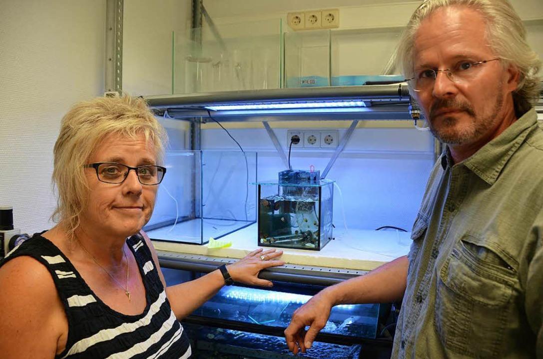 Tübinger Professoren Rita Triebskorn  ...Köhler vor einem Fischlarven-Aquarium.    Foto: hupka