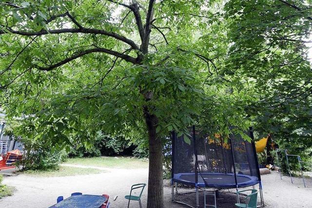 Stadt will der Baumverpflanzung eine Chance geben