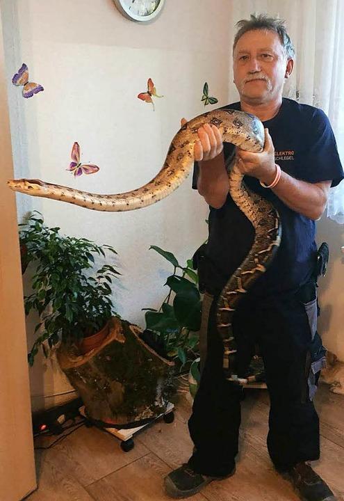 Gesichert: Reptilienexperte Armin Böhler mit der entwischten Boa Constrictor  | Foto: Privat