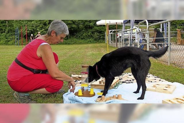 Hundetraining mit hohem Spaßfaktor