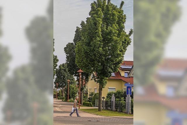 Stadtbirne statt Säulenahorn?