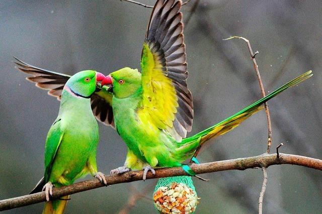 Unbekannte klauen Papagei aus Voliere in Utzenfeld