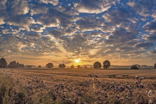 Ein früher Morgen in Hohberg