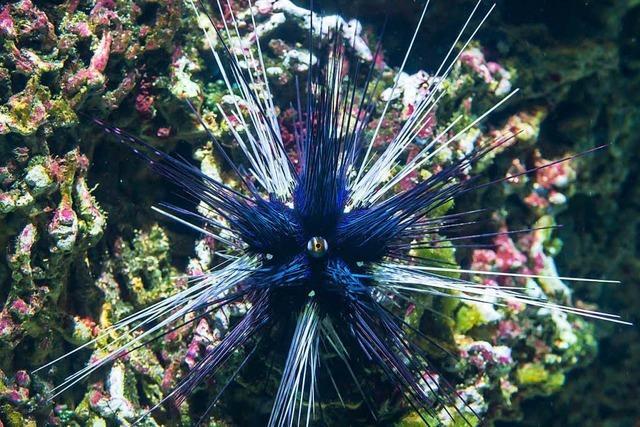 Zoo Basel informiert zur Urlaubszeit über Meerestiere