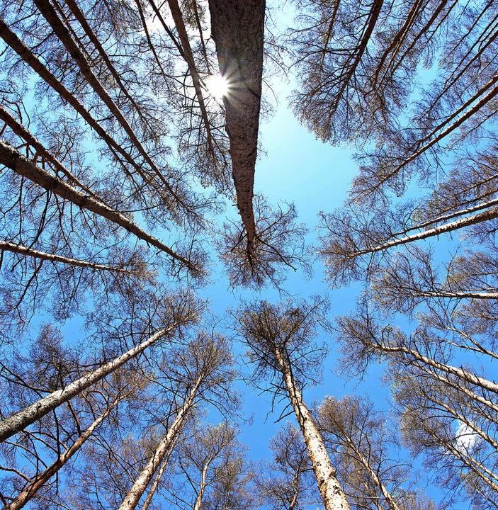 Der Wald ist für viele Kommunen eine gute Einnahmequelle.   | Foto: dpa