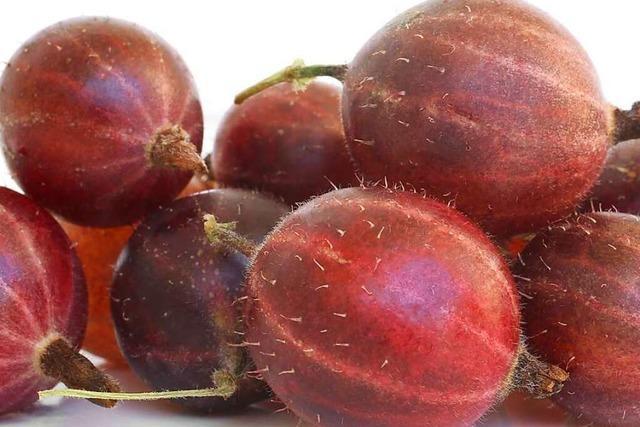 Balsam für den Darm: Stachelbeeren